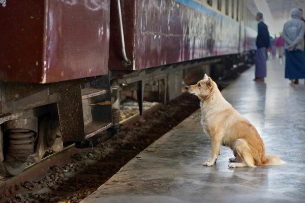 Dog waiting for passenger.
